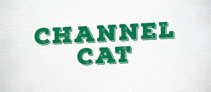 image of Channel Cat