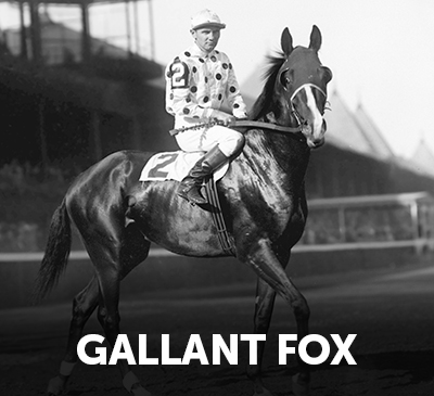 Gallant Fox